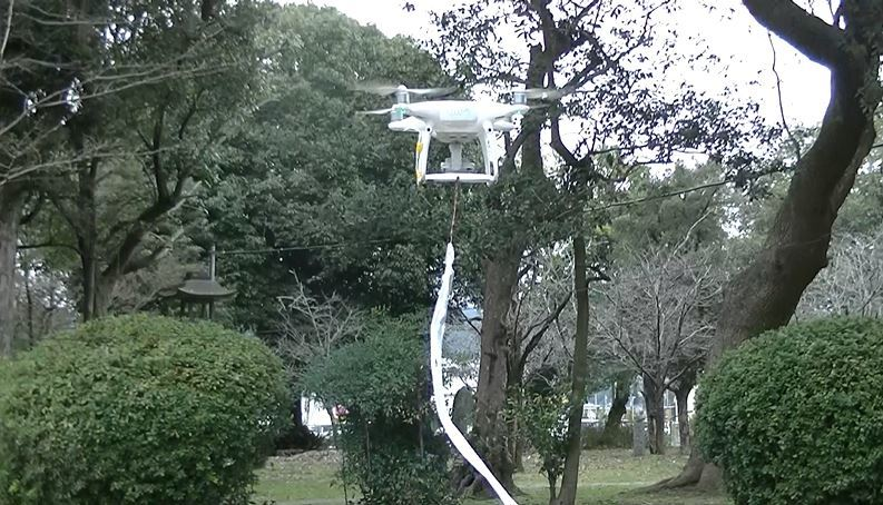 サギの巣作り防止作業中の鷹匠ドローン